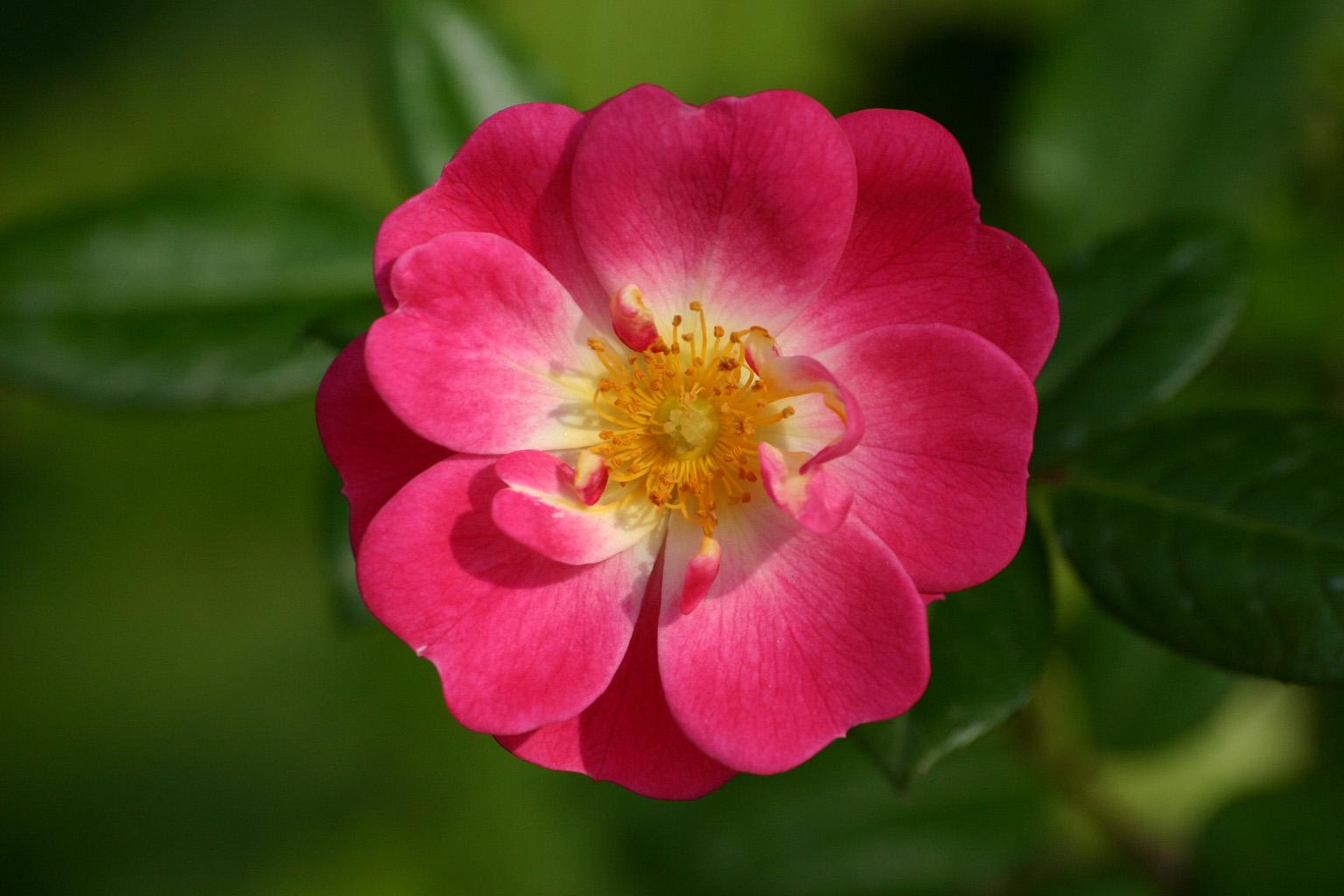 Testez vous sur ce quiz les fleurs et la litt rature for Les noms des fleurs