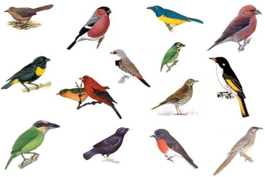 testez vous sur ce quiz noms d 39 oiseaux pour personnages