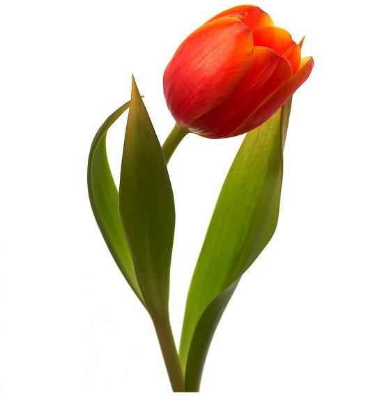 Une fleur dans les titres (ou pas)