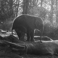 Liste : Les éléphants, héros de romans